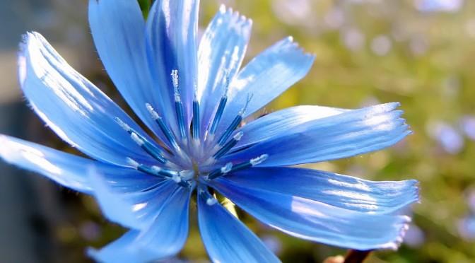 Flower – Blue