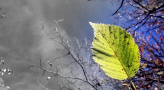 Green Leaf No. 2