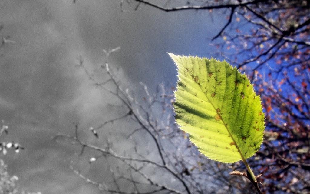 Green-Leaf-1