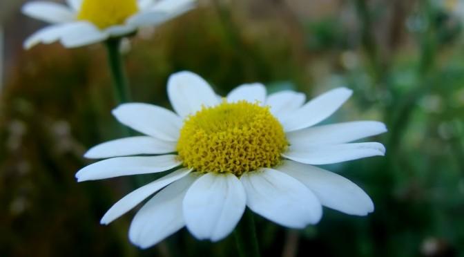 Flower – White