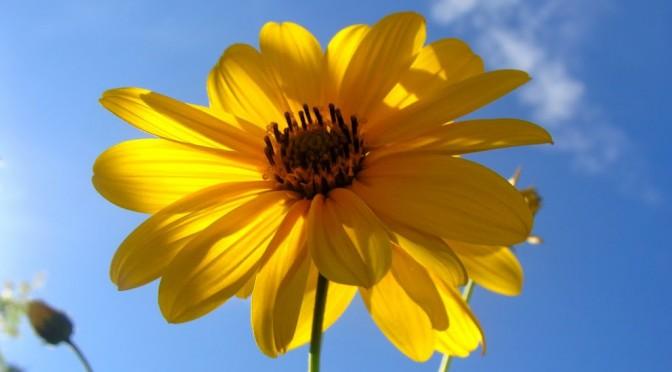 Flower – Yellow
