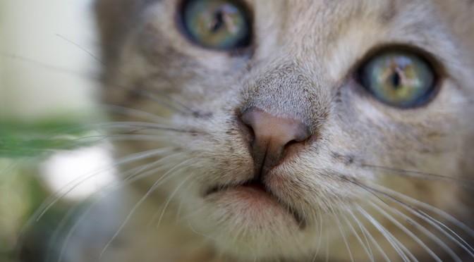 Kitten's eyes