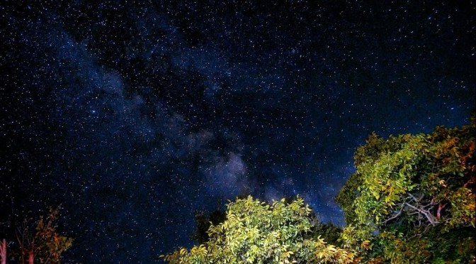 MIlky Way above wallnut trees