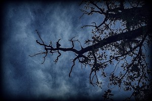 cloudy dark skies and tree branches