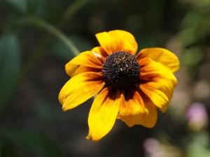 yellow-orange sunlit flower