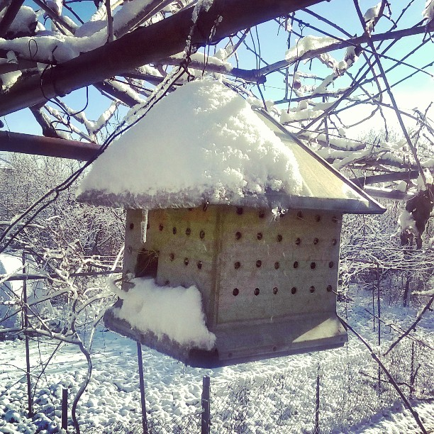 Куќаре #birdhouse #snow #photographyel