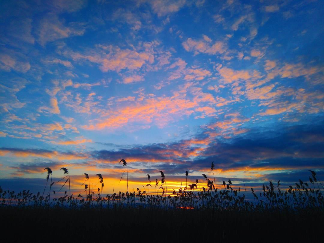 Денешното зајдисонце #sunset #ohrid #reed