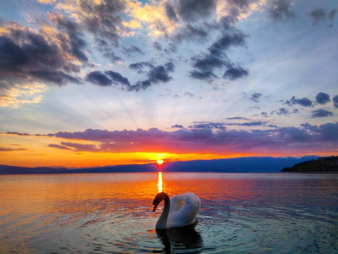 Денешното зајдисонце #sunset #swan #lakeohrid #охрид